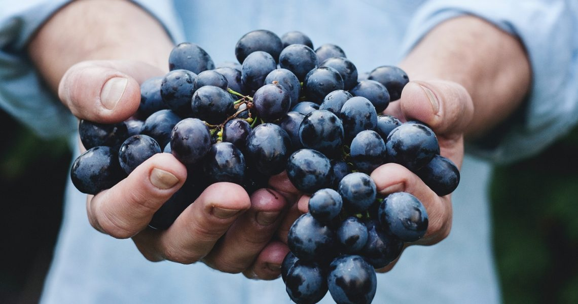 6 new grape varieties approved for use in Bordeaux wines